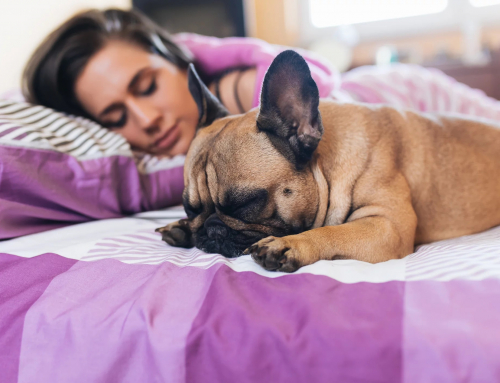 Can't Sleep? Your Dog Can Help